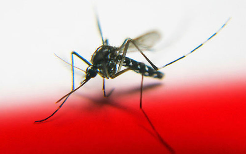 The Best Tips To Keep Your Kids From Chikungunya Virus