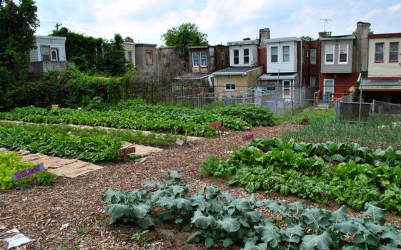 How A Garden Taught Me About Medicine